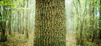 森林地结构树 免版税库存照片