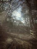 森林地脚道路 库存照片
