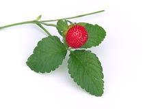 森林地草莓01 库存照片