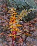 森林地蕨由后照与被过滤的阳光 库存图片