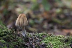 森林地蘑菇 库存图片