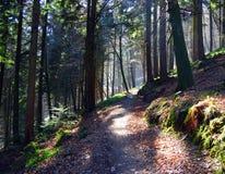 森林地路径 免版税库存图片