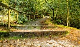 森林地道路和步 免版税库存照片