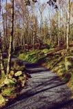 森林地道路在苏格兰 免版税库存照片