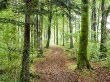森林地道路 库存图片