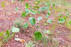 森林地面特写镜头 图库摄影