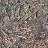 森林地面高分辨率seemless纹理与秋叶的在大小上塑造与6多megapixel的3d的 免版税库存图片