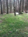 森林地面 库存图片