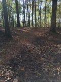 森林地面 免版税库存照片