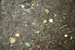 森林地面 免版税图库摄影