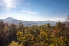 森林地风景 免版税库存图片