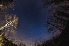 从森林地,超宽fisheye视图的满天星斗的天空 免版税图库摄影