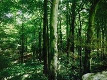 森林地 库存图片