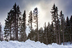 森林场面日落冬天 库存图片