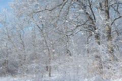 森林场面每多雪的冬天` s天 库存图片