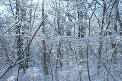 森林场面每多雪的冬天` s天 图库摄影