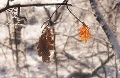 森林场面每多雪的冬天` s天 免版税库存照片