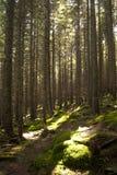 森林场面 图库摄影