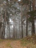 森林场面 库存图片