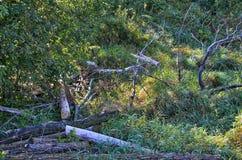 森林场面 免版税库存图片