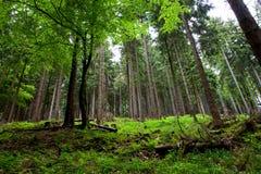 森林场面3 免版税库存图片