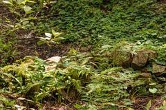 森林垄沟 免版税库存照片