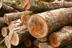 森林堆木头 免版税库存图片