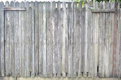 森林墙壁 免版税库存图片