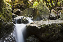 森林声音 库存图片