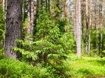 森林夏天 免版税库存图片
