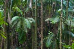 森林夏威夷人 免版税图库摄影
