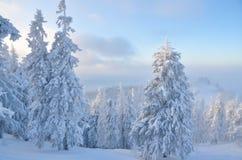 森林多雪的冬天 免版税库存照片