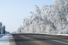 森林多雪的冬天 库存图片