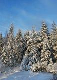 森林多雪的结构树冬天 免版税图库摄影