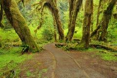 森林大厅青苔雨线索 免版税库存照片