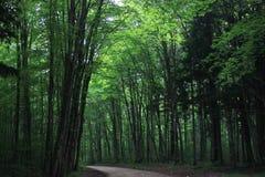 森林大教堂 免版税库存图片