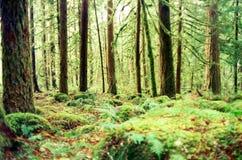 森林太平洋 库存照片