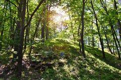 森林太阳 图库摄影