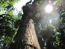 森林太阳 免版税库存照片