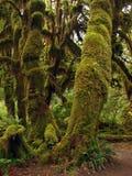 森林奥林匹克公园雨 图库摄影