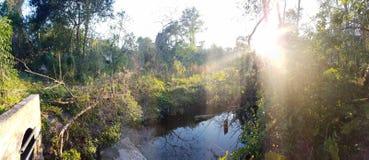 森林密林 库存照片