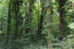 森林富有的植被、分支和叶子的看法 库存图片