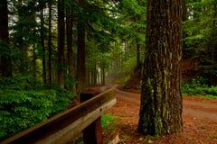 森林富有的路绕 图库摄影