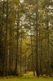 森林寺庙 库存图片