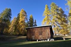 森林小屋在11月晴天 库存图片
