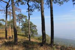 森林小山和天空 免版税库存图片