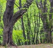 森林小山 库存照片