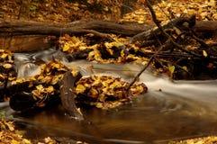 森林小河。 免版税库存照片