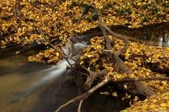 森林小河。 库存图片