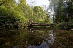 森林小河和残破的树 免版税图库摄影